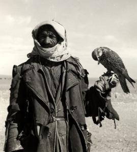 Ruwala (Bedouin) hunter with falcon, Northwestern Saudi Arabia, 1952